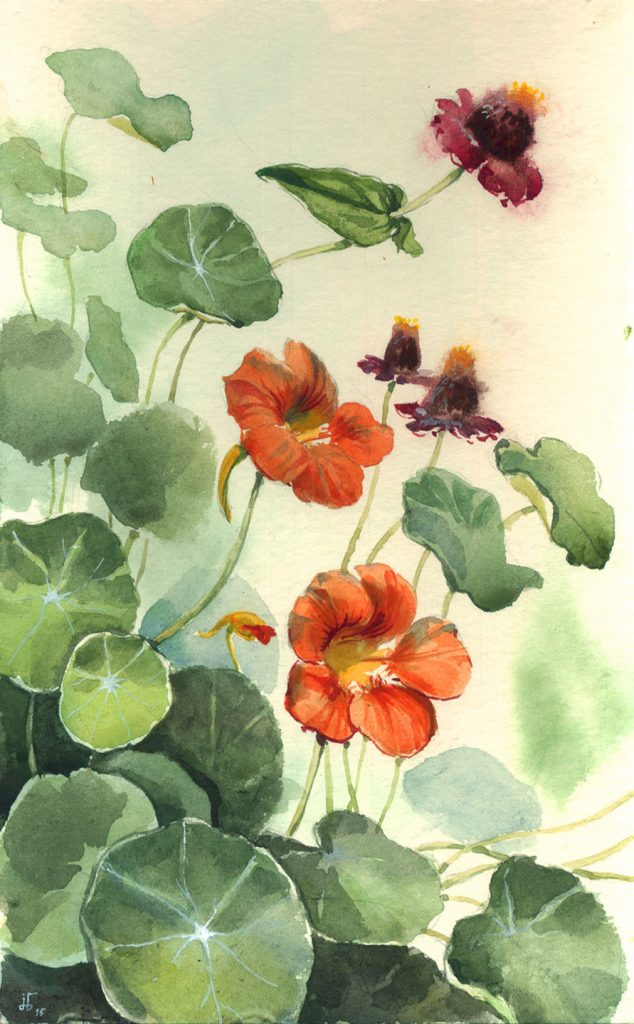 Indian Cress Plein Air - water colour