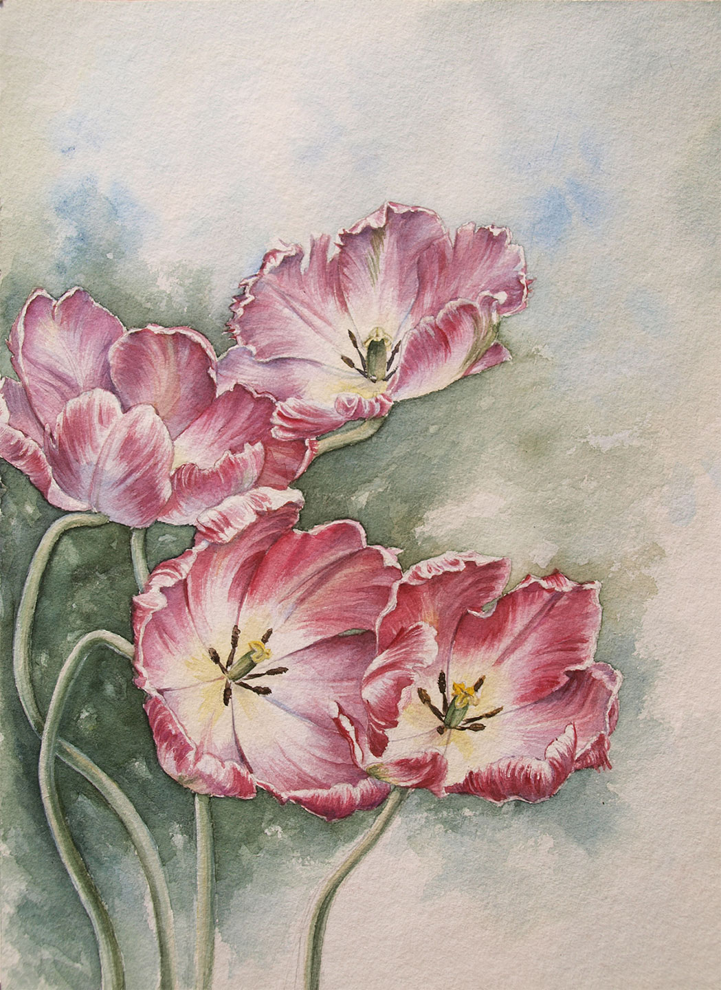 water colour - illustration - tulips