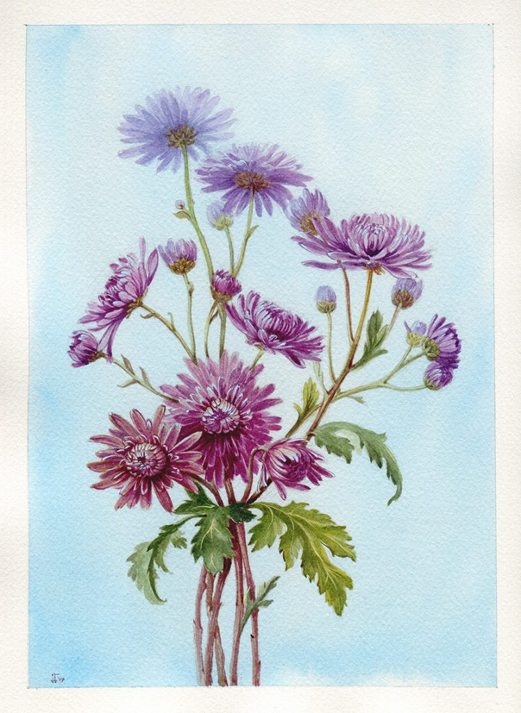 water colour - botanical illustration - purple asters