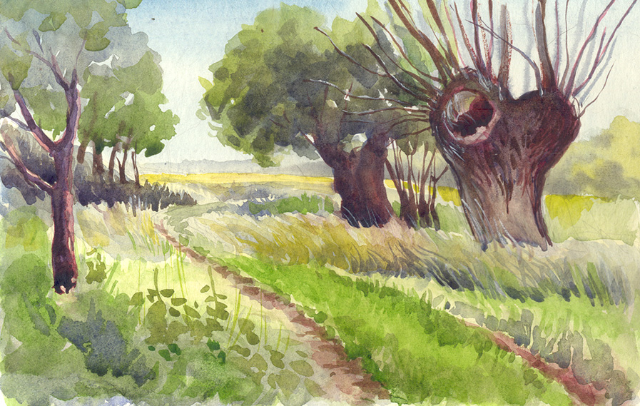 Weiden auf der Halbinsel Devin - Plein Air - Aquarell