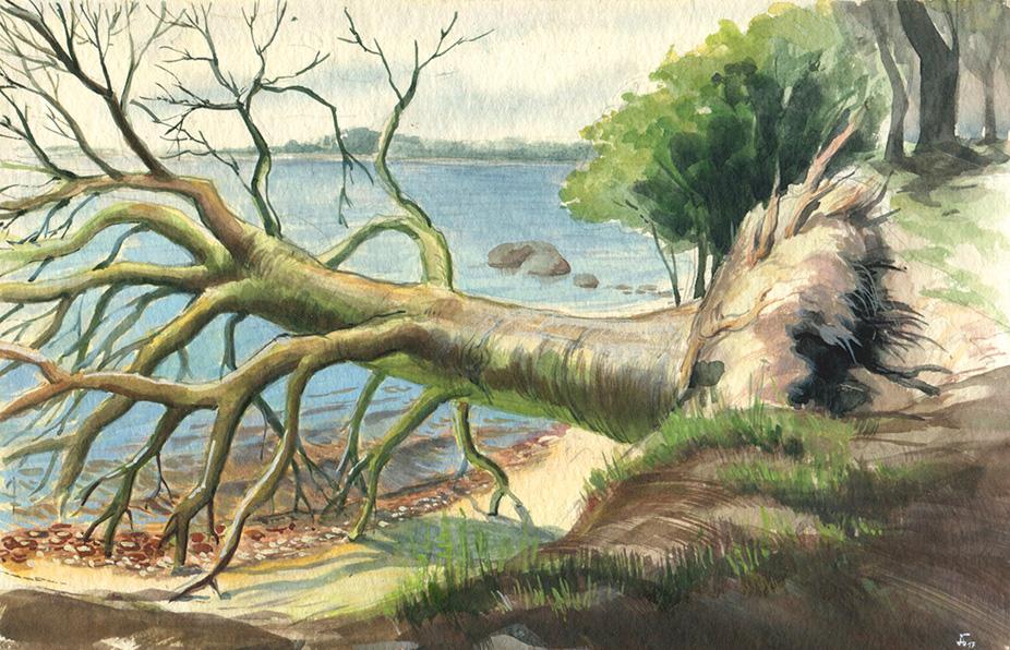 umgestürzter Baum in Wreechen auf Rügen - Plein Air - Aquarell und Gouache