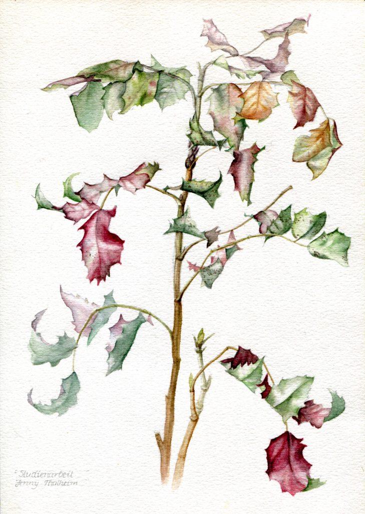 Mahonie Aquarell, Herbstlaub Beispiel, Naß-in-Naß-Technik
