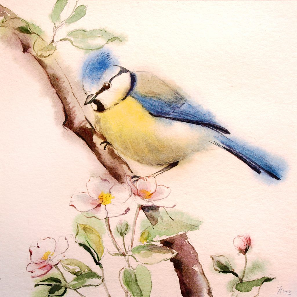 Aquarell - Illustration - Vogel - Blaumeise