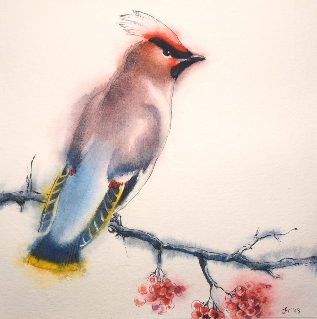 water colour - illustration - bird - waxwing
