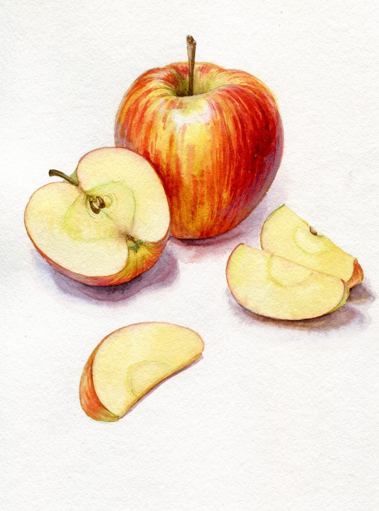 Apples - food illustration - water colour