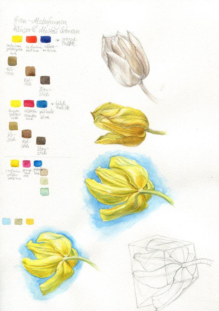 Arbeitsschritte Aquarell, gelbe Tulpe, Untermalung