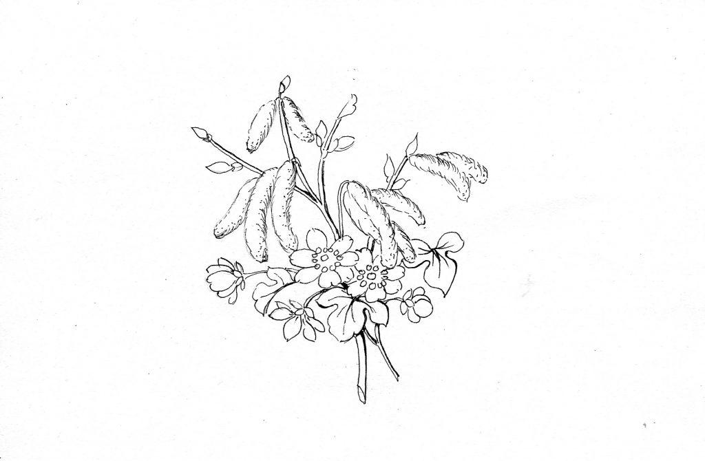 Blumenbild zum Ausmalen, Leberblümchen, Frühling