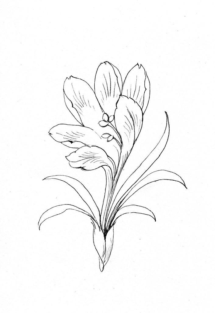 Blumenbild zum Ausmalen, Krokus, Frühling
