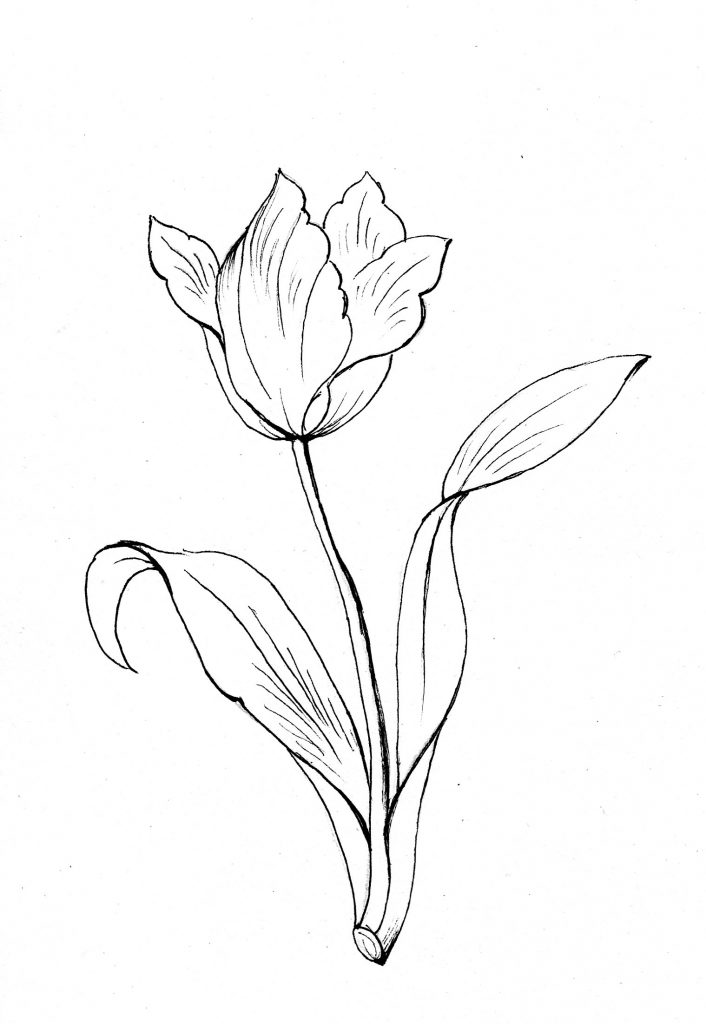 Blumenbild zum Ausmalen, Tulpe, Frühling