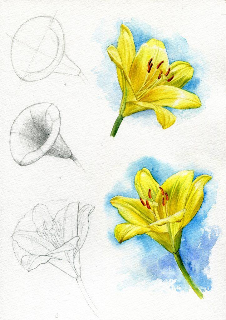 Arbeitsblatt Lilie, gelbe Blumen, Konstruktion, Grundform Tutorial