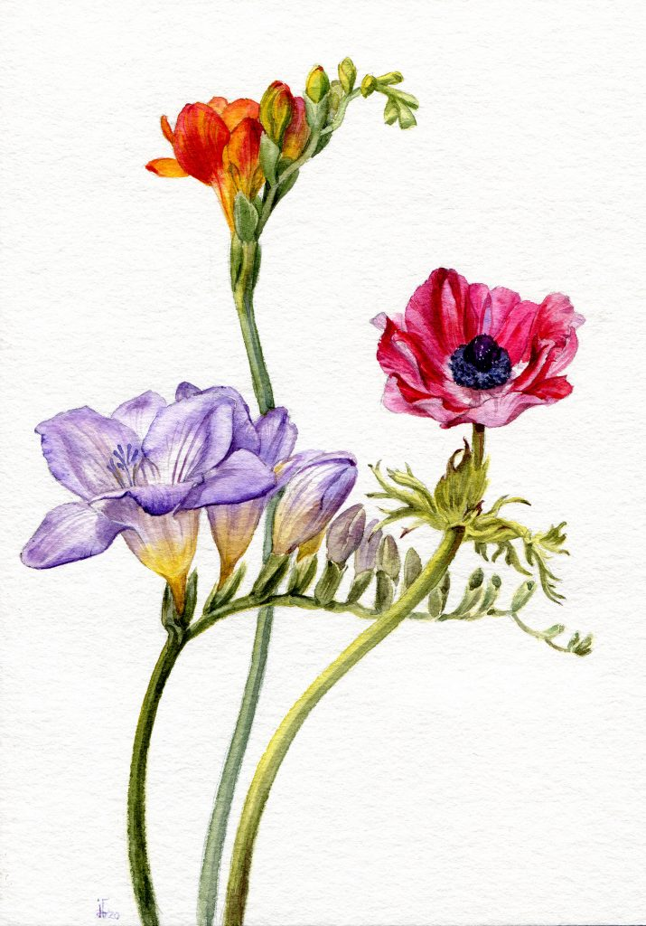 Freesias and Anemone - water colour