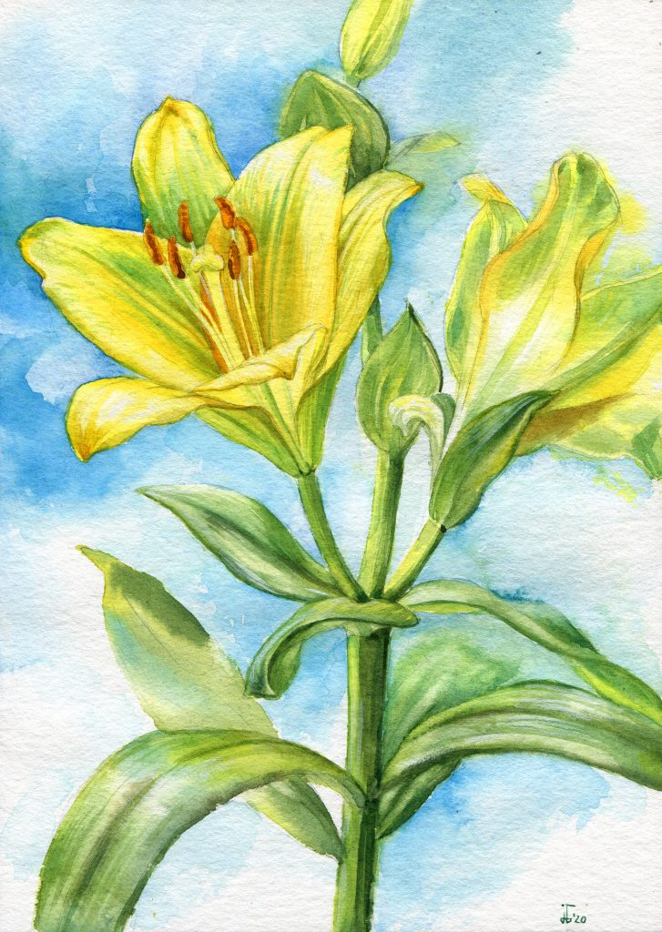 yellow - lilies - water colour