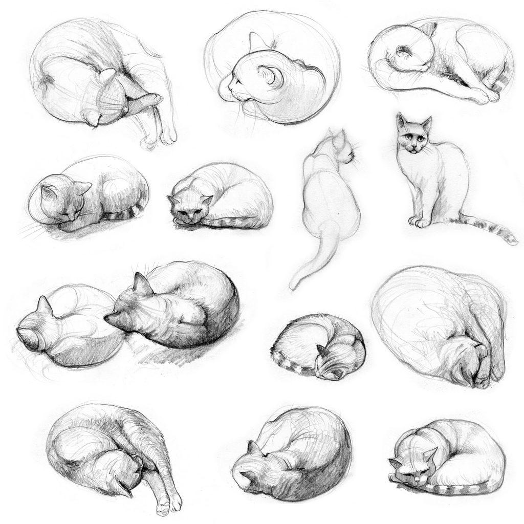 Bleistift - Katzen-Skizze - Studie - Illustration - Wie zeichnet man eine Katze