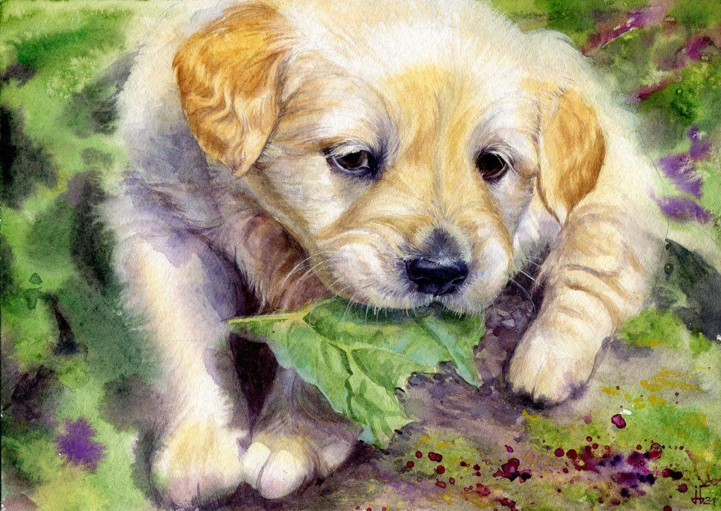 water colour - illustration - dog - puppy - favorite pet - animal portrait - Labrador