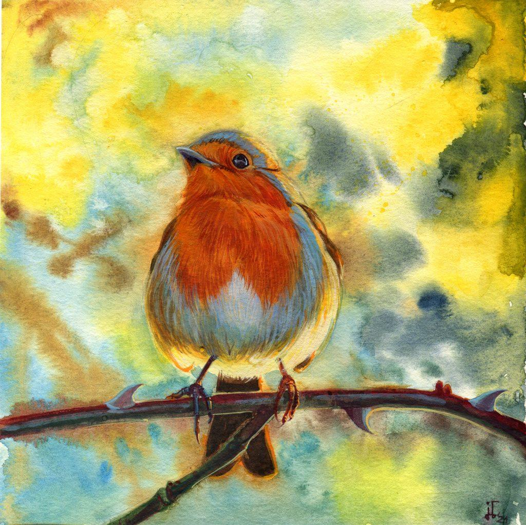 water colour - illustration - bird - robin